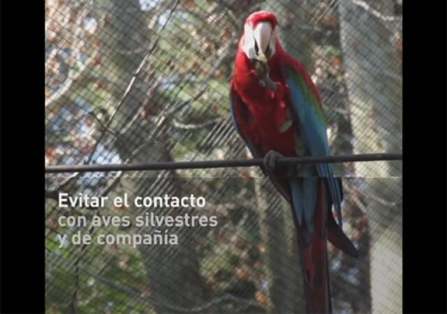 SENASA – Prevención de la Influenza Aviar