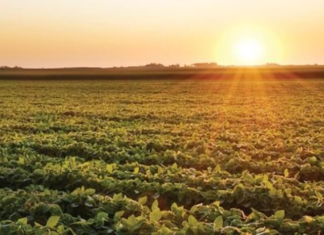 El potencial de la agricultura argentina en el siglo XXI